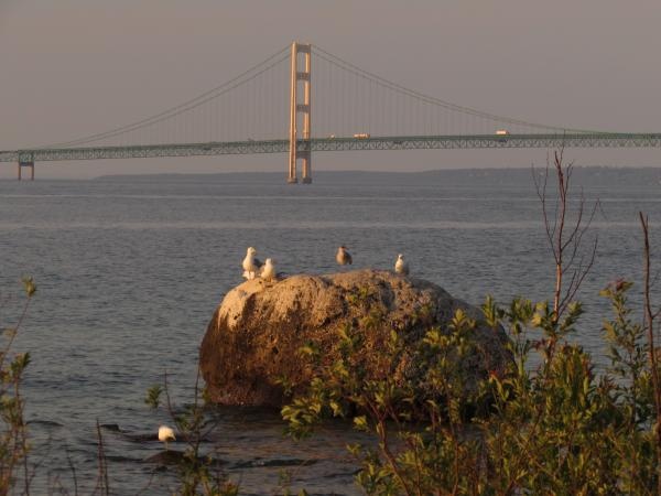 Gulls on a boulder and the Mackinaw Bridge near sunset